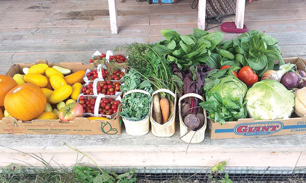 {Growing season in Aylmer: vegetables on the menu?}